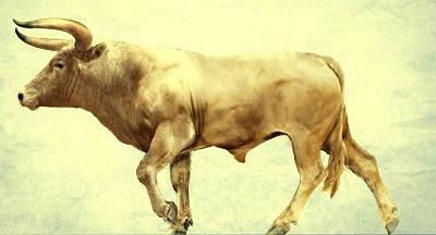 дикий бык