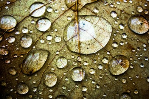 Роса на листе