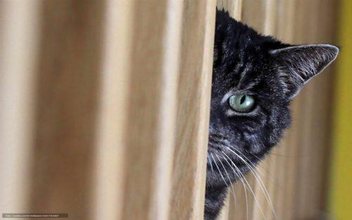 кот-наблюдатель