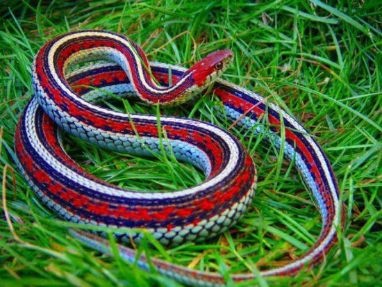 красивая рептилия