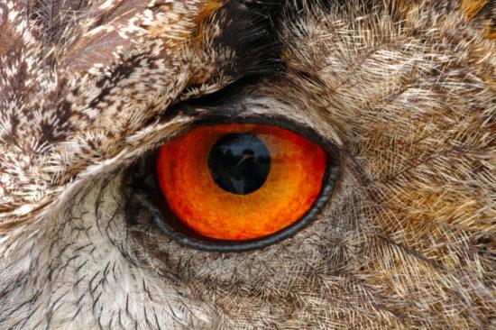 Зрение совы