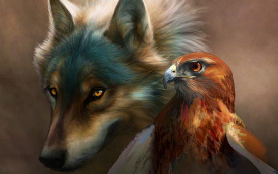 волк и ястреб