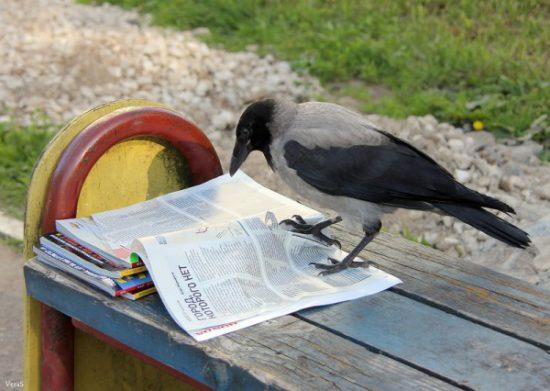 ворона читает журнал