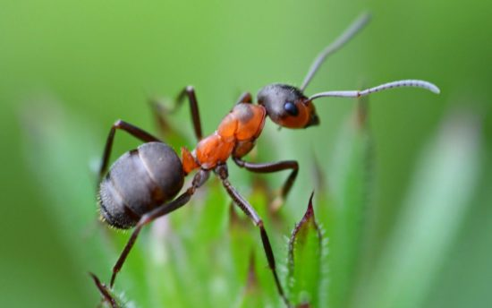 муравей на листке