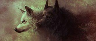 Белый и ччерный волк